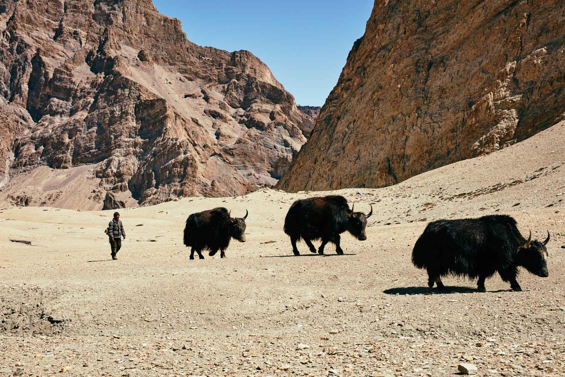 Auf dem Weg von Photoksar nach Gongma/ Ladakh/ Indien, 2018