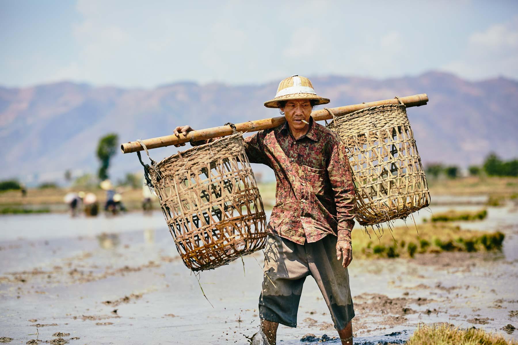 Ein Feldarbeiter am Inle See/ Shan/ Myanmar, 2015