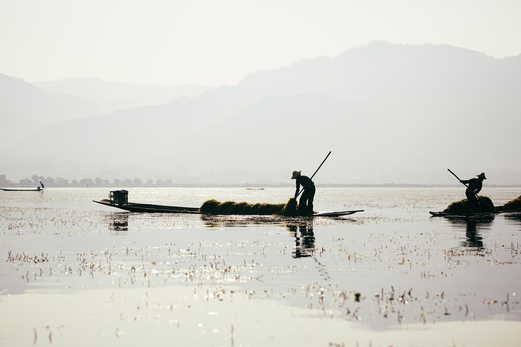 Bauern beim Sammeln von Wasserlilien auf dem Inle See/ Shan/ Myanmar, 2015